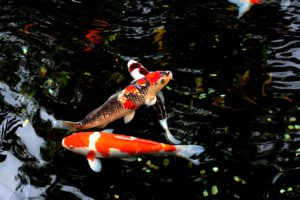 Vissen in polyester vijver
