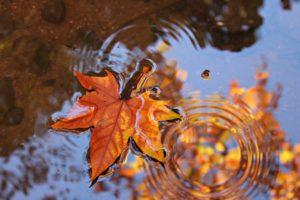 bladeren in polyester vijver